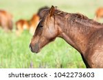 the wild horse  equus ferus  in ... | Shutterstock . vector #1042273603