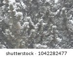 blizzard fir tree.   Shutterstock . vector #1042282477