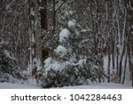 an evergreen tree is covered in ... | Shutterstock . vector #1042284463
