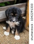 Small photo of Close-up of Sad Little puppy in a wooden box is asking to be adopted with hope. Lovely Homeless black and tan dog