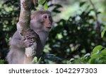 macaque in a tree in vietnam | Shutterstock . vector #1042297303