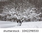 a snow covered tree in the... | Shutterstock . vector #1042298533