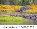 the north american beaver or...   Shutterstock . vector #1042301797
