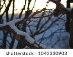 cold winter tree limbs at... | Shutterstock . vector #1042330903