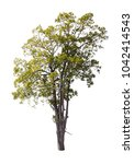 collection of isolated trees on ...   Shutterstock . vector #1042414543