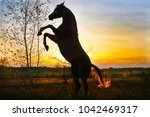thoroughbred arabian horse at... | Shutterstock . vector #1042469317