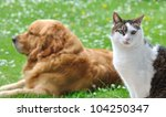 Stock photo eyes of a cat in front of a golden retriever lying in the garden 104250347