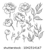 peony flower and leaves drawing.... | Shutterstock .eps vector #1042514167