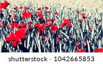 red poppies in a spring... | Shutterstock . vector #1042665853