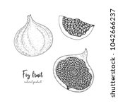 fruit illustration with figs in ... | Shutterstock .eps vector #1042666237