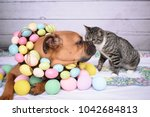 Stock photo easter portrait of a boxer breed dog and a tabby cat 1042684813