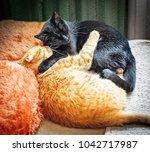 feline brotherly love. hugging... | Shutterstock . vector #1042717987