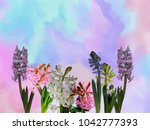 spring floral hyacinth... | Shutterstock . vector #1042777393