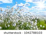 spring bright landscape with... | Shutterstock . vector #1042788103