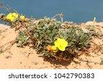 coast of the mediterranean sea... | Shutterstock . vector #1042790383