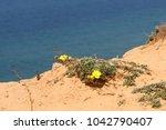 coast of the mediterranean sea... | Shutterstock . vector #1042790407
