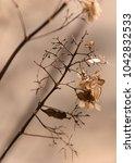 dry leaves ii  winter | Shutterstock . vector #1042832533