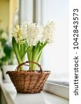 Small photo of White Hyacinths in wicker basket on a window sill closeup