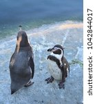 Small photo of Two little penguins soak up the winter sun.