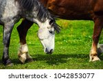 horse in the pasture  sunny day.... | Shutterstock . vector #1042853077