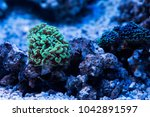 stony polyp coral | Shutterstock . vector #1042891597