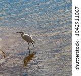 a beautiful graceful white...   Shutterstock . vector #1042911067