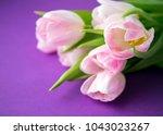 pink fresh spring tulips... | Shutterstock . vector #1043023267