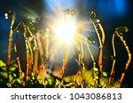 background nature yellow... | Shutterstock . vector #1043086813