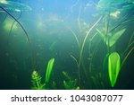 green grass underwater | Shutterstock . vector #1043087077