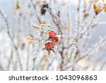 Frozen Flowers And Leaves Of...