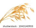 oat spike or ears isolated on... | Shutterstock . vector #1043140903