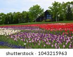 tulips blooming in takino... | Shutterstock . vector #1043215963