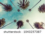 los angeles palm trees  low...   Shutterstock . vector #1043257387