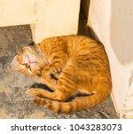 cat cute feline outdoor  | Shutterstock . vector #1043283073