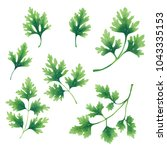 a set of twigs and leaves of... | Shutterstock . vector #1043335153