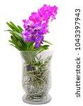 purple and pink vanda orchids | Shutterstock . vector #1043397943