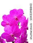 pink vanda orchid | Shutterstock . vector #1043398843