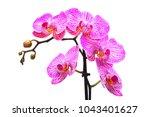 pink orchid flower | Shutterstock . vector #1043401627