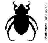 anisoplia austriaca beetle ... | Shutterstock .eps vector #1043402473