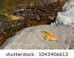 Summer Fallen Leaf On The Rock...
