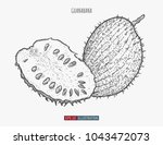 hand drawn guanabana isolated.... | Shutterstock .eps vector #1043472073
