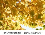 colorful autumn leaves | Shutterstock . vector #1043483407