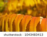 colorful autumn leaves | Shutterstock . vector #1043483413