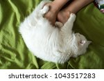 white fluffy cat lies at the... | Shutterstock . vector #1043517283