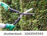 gardener is trimming a hedge.... | Shutterstock . vector #1043545543