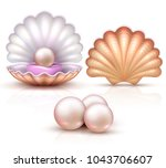 opened and closed seashells... | Shutterstock .eps vector #1043706607