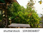 syngonium podophyllum  tricolor ... | Shutterstock . vector #1043836807
