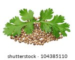 Two green coriander leaves and seeds closeup isolated on white - stock photo