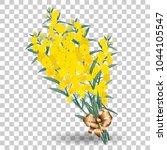 yellow mimosa flower branch... | Shutterstock .eps vector #1044105547