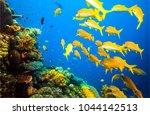 underwater yellow fish shoal... | Shutterstock . vector #1044142513